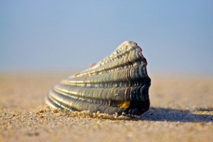 The Shell (2)